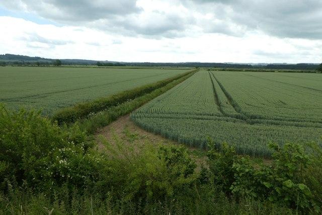 Fields near Brambling Fields interchange