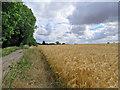 TL5355 : Fulbourn to Fleam Dyke by John Sutton