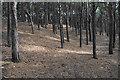 SD2708 : Squirrel Wood by Bill Boaden