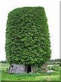 R2850 : Castles of Munster: Dysert, Limerick (2) by Garry Dickinson