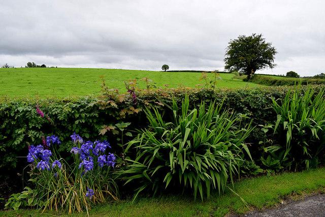Plants along a minor road, Gortnacreagh