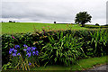 H4178 : Plants along a minor road, Gortnacreagh by Kenneth  Allen