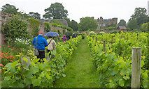 SO4465 : Walled Garden at Croft Castle, 7 by Jonathan Billinger