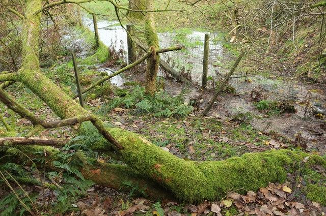Swampy woodland near Kennisham Hill