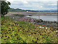 NT1977 : Sweet Cicely and the Firth of Forth at Cramond by M J Richardson