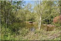 TQ5939 : Pond, Dunorlan Park by N Chadwick
