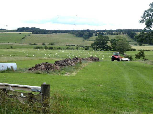 Field east of Middleton village
