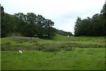 NY3404 : Field near the Oaks by DS Pugh