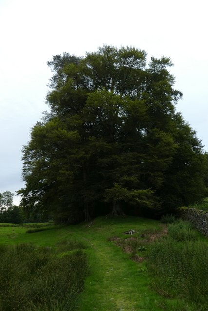 Footpath to Loughrigg Tarn