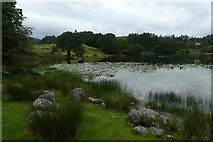 NY3404 : Edge of Loughrigg Tarn by DS Pugh