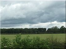 SE8947 : Dark clouds over Prickett Walk plantation by Christine Johnstone