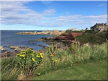 NT6779 : A Coastal View of Dunbar from Bayswell by Jennifer Petrie