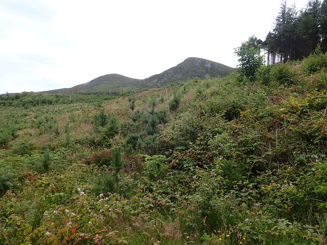 Nursery plantation in Donard Wood