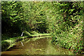 SJ6931 : Canal in Woodseaves Cutting, Shropshire by Roger  Kidd