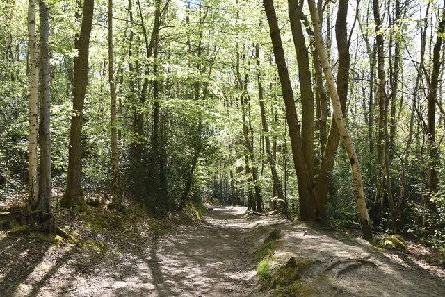 Hurst Wood