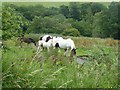 NZ1739 : Horses beside the Deerness Valley Path by Oliver Dixon