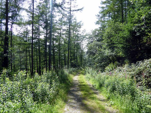 Permissive path through Coed Dol-fawr
