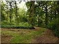 SK6252 : Godson's Plantation by Alan Murray-Rust