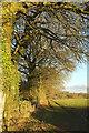 SX7883 : Trees lining track to Moorbarn by Derek Harper