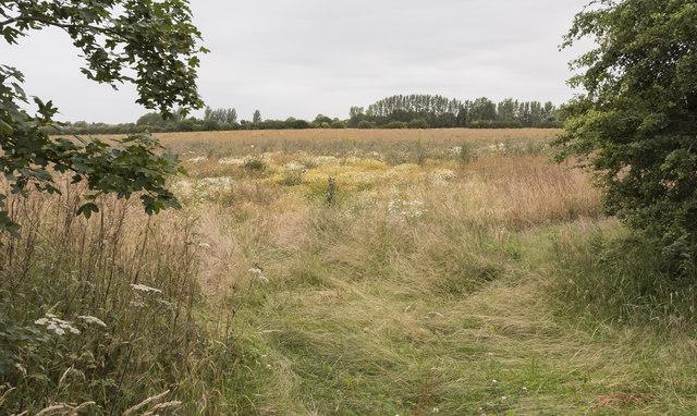Fields near Grove Kennels