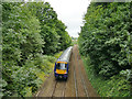 SE2636 : Train through Morris Wood by Stephen Craven