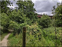 TQ5571 : Darent Valley Path by Paul Williams
