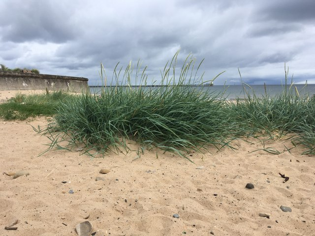 Marram grass on Blyth Beach