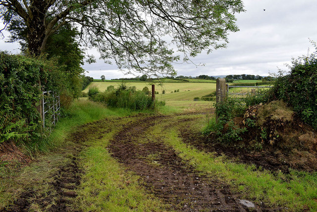 Muddy tracks to fields, Beragh
