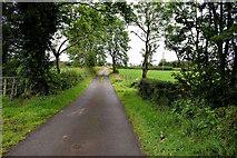 H5366 : Small bridge along Laragh Road by Kenneth  Allen