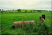 H5366 : Roller in a field, Laragh by Kenneth  Allen