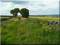 SE2202 : Footpath on field access track, Thurlstone by Humphrey Bolton