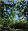 TF0820 : Blue skies and Ash trees by Bob Harvey