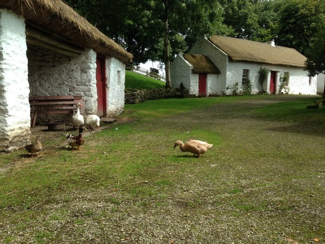 Geese and ducks, Ulster American Folk Park