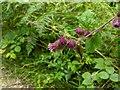 TF0820 : Burdock flowers by Bob Harvey