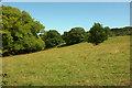 SX8863 : Field with trees, Cockington by Derek Harper