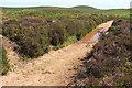 ST1438 : Puddle on bridleway near Halsway Post by Derek Harper
