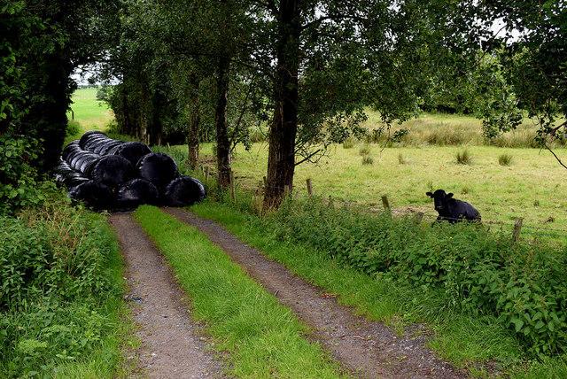 Overgrown lane, Tattraconnaghty