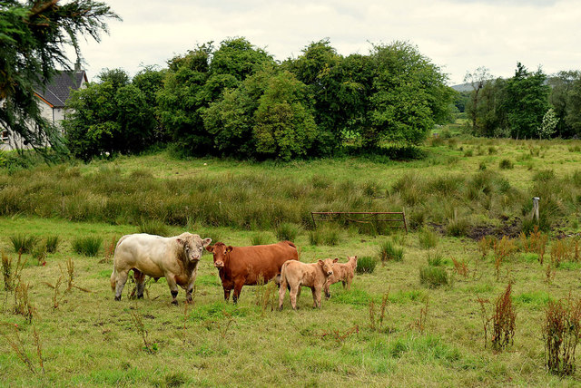 Cattle family, Tattraconnaghty