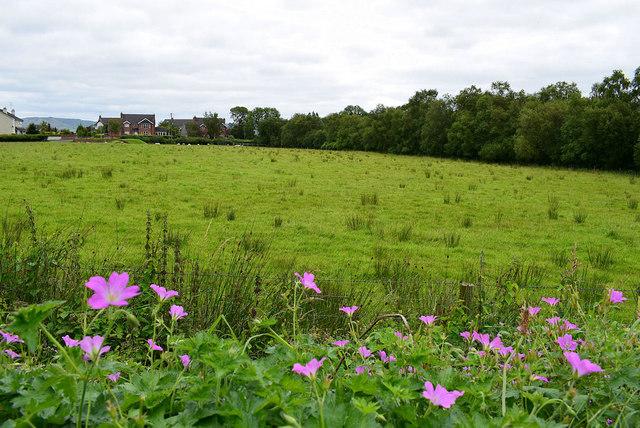 Wild flowers along Castletown Road