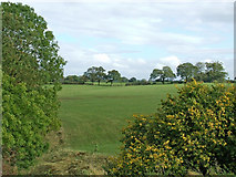 SJ6541 : Cheshire farmland south of Audlem by Roger  Kidd