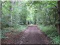NT5268 : Fawn Wood, Gifford by M J Richardson