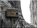 NZ1960 : Plaque on Lady Sarah's Tree by Oliver Dixon