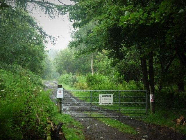 Woodland track in Fir Park