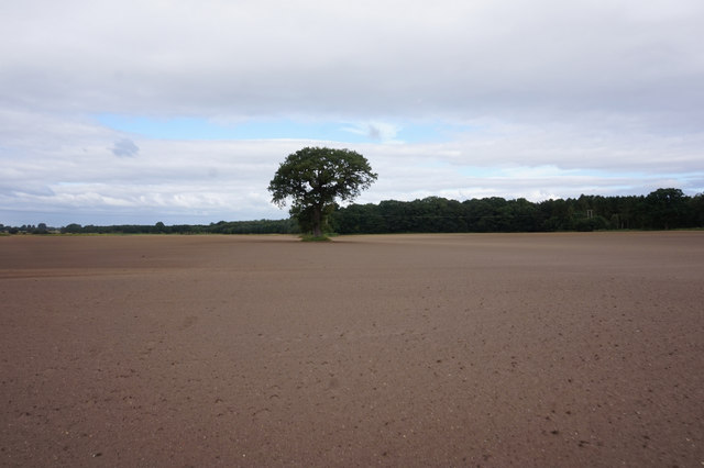 Path leading towards New Plantation