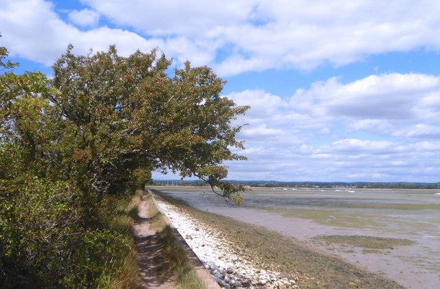 Tree by the Coastal Path