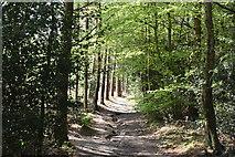 TQ5936 : HWLT, Chase Wood by N Chadwick