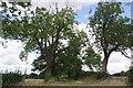 TL4430 : Bridleway 29 and Signs of Ash Dieback? by Glyn Baker
