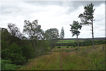 NJ1348 : Track in Glen Lossie by Anne Burgess