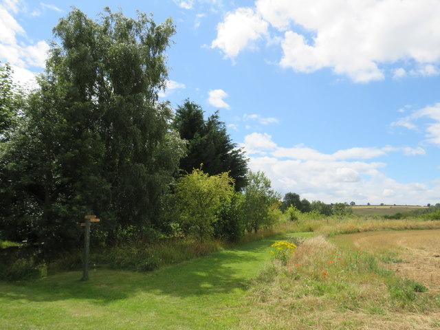 Shakespeare's Way, near Enstone