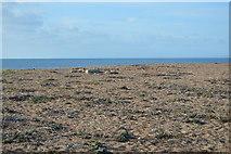SY5088 : Cogden Beach by N Chadwick